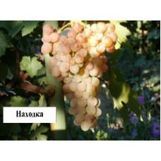 Саженцы винограда Находка