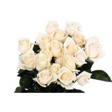 Саженцы роз Вендела